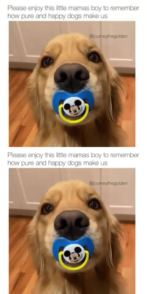 theanimalmemes:  The video you didn't know you needed right now.Pup @journeythegolden: theanimalmemes:  The video you didn't know you needed right now.Pup @journeythegolden