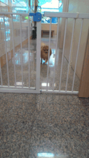 Omg, Tumblr, and Blog: thearrowflash:  notfunnymistahj:  33v0:  Wqhat the fuck  ITS JUST FLUFF. THERES NO DOG ITS JUST FLUFF OMG  No that dog has super speed and is vibrating so fast that it is able to move its molecules through that fence.