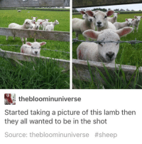 Memes, Squad, and Squad Up: thebloominuniverse  Started taking a picture of this lamb then  they all wanted to be in the shot  Source: thebloominuniverse squad UP - Max textpost textposts