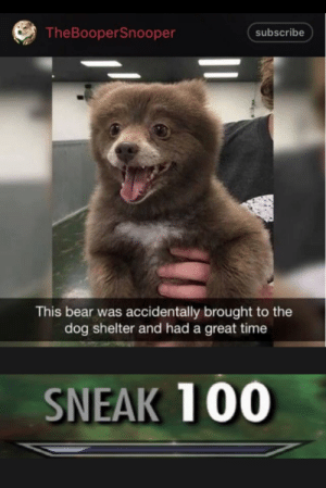 Dank, Memes, and Target: TheBooperSnooper  subscribe  This bear was accidentally brought to the  dog shelter and had a great time  SNEAK 100 Bear = Dog by TSGDeco MORE MEMES