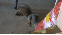 """Target, Tumblr, and Blog: thecharge: spacespectrum: my armenian father getting angry at a squirrel  """"you are. stealink…. my nuts…"""""""