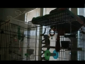 """thecutestofthecute: infamousnfamous:   nanoochka:  nonomella:  strawberrytop007:  hyperwolf:  livelife-havefun-partyhard:  Parrot caught singing let the bodies hit the floor  I was so done when it whispered…I would shit bricks if I heard that when I got up to get a drink in the middle of the night…  """"Let the bodies hit the….FLOOOOOOOOOOOOOOOOOOOOOR!!!""""  oh my god he's so into it  metal   IT ME   I'm going to explode : thecutestofthecute: infamousnfamous:   nanoochka:  nonomella:  strawberrytop007:  hyperwolf:  livelife-havefun-partyhard:  Parrot caught singing let the bodies hit the floor  I was so done when it whispered…I would shit bricks if I heard that when I got up to get a drink in the middle of the night…  """"Let the bodies hit the….FLOOOOOOOOOOOOOOOOOOOOOR!!!""""  oh my god he's so into it  metal   IT ME   I'm going to explode"""