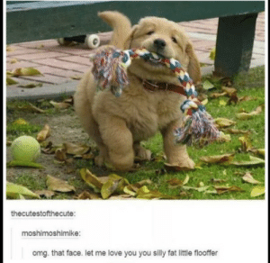 Love, Omg, and Fat: thecutestofthecute:  moshimoshimike:  omg. that face. let me love you you silly fat little flooffer A derp on his way to greater derpdom