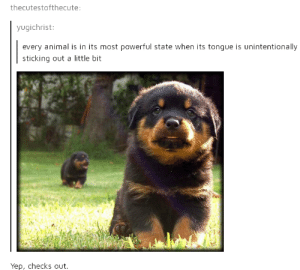 Animal, Powerful, and Biology: thecutestofthecute:  yugichrist:  every animal is in its most powerful state when its tongue is unintentionally  sticking out a little bit  Yep, checks out Simple biology