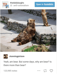 thedailylaughs  Open in tumblr  eanti-colonialism  stunningpicture  Yeah, am bear. But some days, why am bear? Is  there more than bear?  123,985 notes