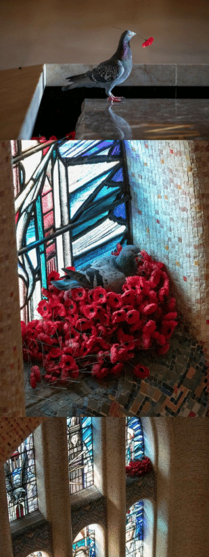 thedeadofflandersfields:  Pigeon steals poppies from the Tomb of the Unknown Soldier, Australian War Memorial, Canberra, Australia in order to build a nest beside a stained glass window.: thedeadofflandersfields:  Pigeon steals poppies from the Tomb of the Unknown Soldier, Australian War Memorial, Canberra, Australia in order to build a nest beside a stained glass window.