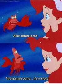 Ariel, Memes, and The Little Mermaid: thedisneyprincess tumbircom  Ariel, listen to me  The human worid... It's a mess. The Little Mermaid