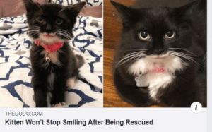 awesomacious:  HE IS SO HAPPY: THEDODO.COM  Kitten Won't Stop Smiling After Being Rescued awesomacious:  HE IS SO HAPPY