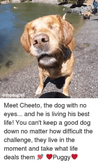 Life, Best, and Good: @thedogist  Meet Cheeto, the dog with no  eyes... and he is living his best  life! You can't keep a good dog  down no matter how difficult the  challenge, they live in the  moment and take what life  deals them Puggy <p>Yay Cheeto!!</p>