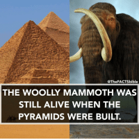 The Pyramids Of Giza were constructed around 4,500 years ago.: @TheFACTSbible  THE WOOLLY MAMMOTH WAS  STILL ALIVE WHEN THE  PYRAMIDS WERE BUILT. The Pyramids Of Giza were constructed around 4,500 years ago.