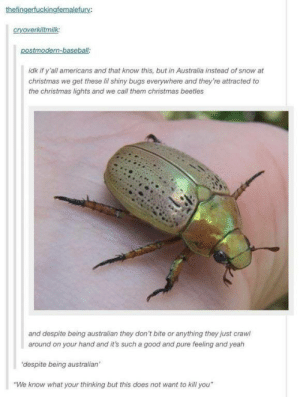 """Christmas in Australia: thefingerfuckingfemalefury:  cryoverkiltmilk:  postmodern-baseball  idk if y'all americans and that know this, but in Australia instead of snow at  christmas we get these lil shiny bugs everywhere and they're attracted to  the christmas lights and we call them christmas beetles  and despite being australian they don't bite or anything they just crawl  around on your hand and it's such a good and pure feeling and yeah  'despite being australian'  """"We know what your thinking but this does not want to kill you"""" Christmas in Australia"""