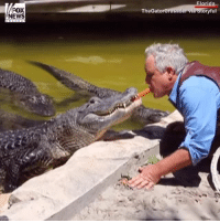 "Dogs, Memes, and News: TheGato  oryful  NEWS WATCH: The ""Gator Crusader"" feeds alligators hot dogs from his mouth."