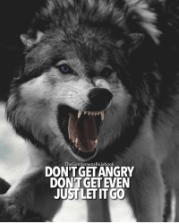 """Memes, Let It Go, and Ecclesiastes: TheGentlemensRulebook  DONT GETANGRY  DONT GET EVEN  JUST LET IT GO Ecclesiastes 7:9 """"Be not quick in your spirit to become angry, for anger lodges in the heart of fools.""""..Learn where to properly invest your energy. The only type of anger that's ok, is righteous anger. LIKE & TAG SOMEONE WHO NEEDS THIS!"""