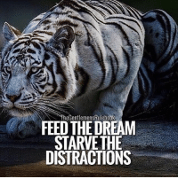Memes, Weather, and 🤖: TheGentlemensRulebook  FEED THE DREAM  STARVETHE  DISTRACTIONS One of the biggest reasons behind the lack of success for many people, is distraction. It's so easy to get tied up in the distractions of our daily lives because most distractions come in disguise. A friend asking to hang out when you have that needs to get done, the beautiful weather, the sports games on TV, YouTube, etc. Anything or anyone not helping you get closer to your goals is a distraction. TAG SOMEONE WHO NEEDS TO SEE THIS & LIKE!