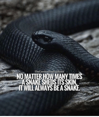 Don't allow the same person person to fool you more than once. Forgive but don't be a fool. LIKE IF YOU AGREE & LEAVE A COMMENT!: TheGentlemensRulebook  NOMATTERHOW MANYTIMES  ASNAKE SHEDS ITS SKIN  ITWILL ALWAYS BEA SNAKE Don't allow the same person person to fool you more than once. Forgive but don't be a fool. LIKE IF YOU AGREE & LEAVE A COMMENT!