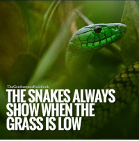 Memes, Snakes, and 🤖: TheGentlemensRulebook  THE SNAKES ALWAYS  SHOW WHENTHE  GRASS IS LOW Hard times will reveal them. If even the hard times are only for that then it was something worth going through. LEAVE A COMMENT & TAG 3 PEOPLE!