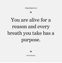 Follow @thegoodquote.co for more quotes. thegoodquote 🌻: thegoodquote.co  CS  You are alive for a  reason and every  breath you take has a  purpose.  @GeneralGypsy Follow @thegoodquote.co for more quotes. thegoodquote 🌻