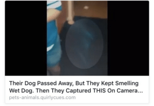 Animals, Tumblr, and Blog: Their Dog Passed Away, But They Kept Smelling  Wet Dog. Then They Captured THIS On Camera...  pets-animals.quirlycues.com grimelords:  he's back and he's wetter than ever