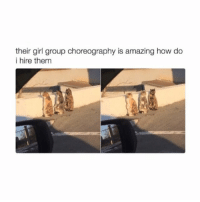 Memes, 🤖, and Harrypotter: their girl group choreography is amazing how do  i hire them damn do you think there's some sort of YouTube tutorial to teach my dog their sweet moves? -L tumblrtextpost tumblr tumblrfunny tumblrcomedy textpost comedy me same funny haha hahaha relatable lol fandoms supernatural harrypotter youtube phandom allthehashtags sorryforthehashtags illstopnow