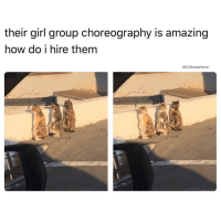 Memes, Smashing, and 🤖: their girl group choreography is amazing  how do i hire them  @Dr Smash love (@dopegrounds) Is it just me or do these cats look like they bout to advise u to not go chasing waterfalls, and that it's more advisable to stick to the rivers (and lakes) that you're used to 🌝🌝🌝😂😂😂
