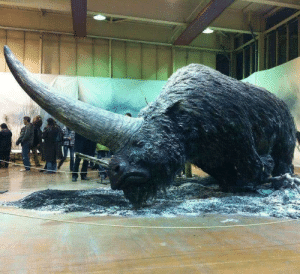 Driving, Tumblr, and Winter: theladytrickster:  sixpenceee: Elasmotherium or the Siberian Unicorn is an extinct genus of giant rhinoceros endemic to Eurasia during the Late Pliocene through the Pleistocene era.  The best known, E. sibiricum was the size of a mammoth and is thought to have borne a large, thick horn on its forehead which was used for defense, attracting mates, driving away competitors, sweeping snow from the grass in winter and digging for water and plant roots. Like all rhinoceroses, elasmotheres were herbivorous. Unlike any others, its high-crowned molars were ever-growing. Its legs were longer than those of other rhinos and were designed for galloping, giving it a horse-like gait. The Russian paleontologists of the 19thcentury who discovered and named the initial fossils were influenced by ancient legends of a huge unicorn roaming the steppes of Siberia. To date no evidence either contradicts or confirms the possibility that Elasmotherium survived into legendary times. (Source)  Everyone look at my large boy