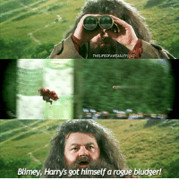 Broomstick, Life, and Memes: THELIFEOFAWEASLEYI IG  Blimey, Harrys got himself a rogue bludger! - Date: 26-06-17 --- I think I would be in constant fear of my life if I was at Hogwarts. --- Q- would you rather fly a broomstick or a hippogriff? --- HarryPotter TheChamberOfSecrets
