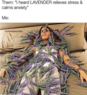 "Lavender: Them: ""I heard LAVENDER relieves stress &  calms anxiety""  Me:  @planetmunchkin  made with mematis"