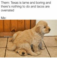 Shhhh. It's okay if you're jealous.: Them: Texas is lame and boring and  there's nothing to do and tacos are  overrated  Me  @texashumor Shhhh. It's okay if you're jealous.
