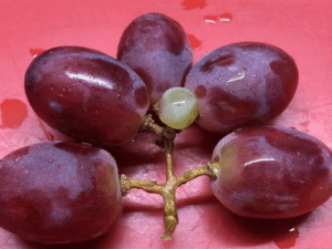 Them: Why are you taking a picture of grapes? Me: The internet will understand: Them: Why are you taking a picture of grapes? Me: The internet will understand