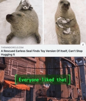Seal, Com, and Toy: THEMINDCIRCLE.COM  A Rescued Earless Seal Finds Toy Version Of Itself, Can't Stop  Hugging It  Everyone 1iked that