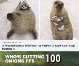 Aww so cute: THEMINDCIRCLE.COM  A Rescued Earless Seal Finds Toy Version Of Itself, Can't Stop  Hugging It  WHO'S CUTTING  ONIONS FFS  00 Aww so cute
