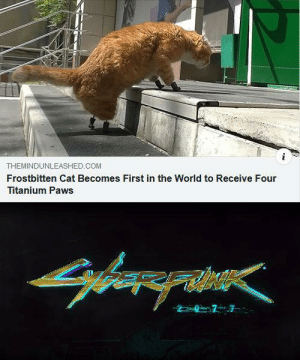 Cybernetic cyborg cats are coming by Arszenik MORE MEMES: THEMINDUNLEASHED.COM  Frostbitten Cat Becomes First in the World to Receive Four  Titanium Paws Cybernetic cyborg cats are coming by Arszenik MORE MEMES