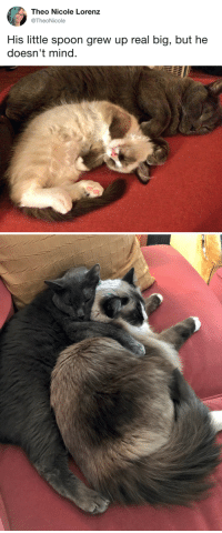 """Tumblr, Twitter, and Blog: Theo Nicole Lorenz  @TheoNicole  His little spoon grew up real big, but he  doesn't mind. <p><a href=""""http://tumblr.tastefullyoffensive.com/post/165871127688/via-theonicole"""" class=""""tumblr_blog"""">tastefullyoffensive</a>:</p>  <blockquote><p>(via <a href=""""https://twitter.com/TheoNicole/status/913150543350128640"""">theonicole</a>)</p></blockquote>"""