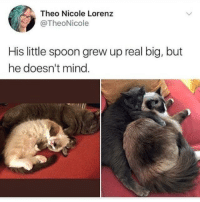 """Cute, Mind, and Spoon: Theo Nicole Lorenz  @TheoNicole  His little spoon grew up real big, but  he doesn't mind <p>Too cute for words via /r/wholesomememes <a href=""""https://ift.tt/2JNqSPG"""">https://ift.tt/2JNqSPG</a></p>"""