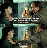 Harry Potter, Memes, and Time: ThePerksof BeingaWeasley  NWhat creature sat in the corner the first time  Harry Potter visited myoffice in Hogwarts?  Are you mad?!  What creature?  A Grindylow! aaaaa grindylow! harrypotter