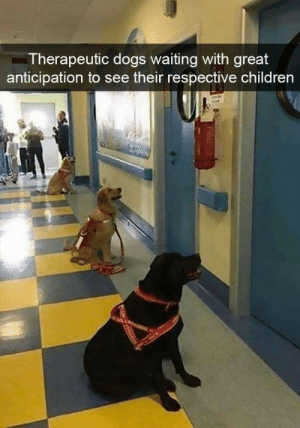 Children, Dogs, and Waiting...: Therapeutic dogs waiting with great  anticipation to see their respective children This is so adorable
