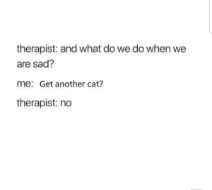 Me irl: therapist: and what do we do when we  are sad?  me: Get another cat?  therapist: no Me irl