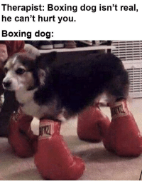 Boxing boi via /r/memes https://ift.tt/2GQFxL3: Therapist: Boxing dog isn't real  he can't hurt you.  Boxing dog Boxing boi via /r/memes https://ift.tt/2GQFxL3