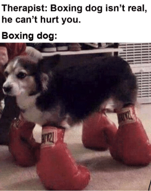 Boxing boi by Skadank MORE MEMES: Therapist: Boxing dog isn't real  he can't hurt you.  Boxing dog Boxing boi by Skadank MORE MEMES