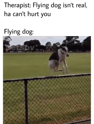 wow what is happening to doge? wow doge is flying with ... |Flying Dog Meme