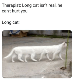 Cat, You, and Real: Therapist: Long cat isn't real, he  can't hurt you  Long cat: Long cat