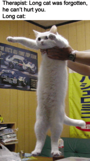 Dank Memes, Cat, and You: Therapist: Long cat was forgotten,  he can't hurt you  Long cat:  ITCS ATIE L.E.N.G.T.H L.O.R.D
