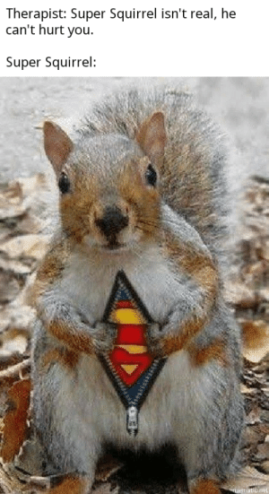 Fear the cutest little squirrel's might: Therapist: Super Squirrel isn't real, he  can't hurt you.  Super Squirrel: Fear the cutest little squirrel's might