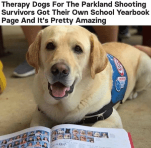 Dog Memes Of The Day 30 Pics – Ep53 #animalmemes #dogmemes #memes #dogs - Lovely Animals World: Therapy Dogs For The Parkland Shooting  Survivors Got Their Own School Yearbook  Page And It's Pretty Amazing  wnshy Dog Memes Of The Day 30 Pics – Ep53 #animalmemes #dogmemes #memes #dogs - Lovely Animals World