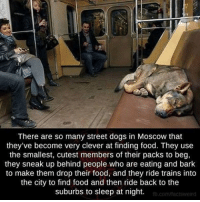 Memes, 🤖, and Moscow: There are so many street dogs in Moscow that  they've become very clever at finding food. They use  the smallest, cutest members of their packs to beg,  they sneak up behind people who are eating and bark  to make them drop their food, and they ride trains into  the city to find food and then ride back to the  suburbs to sleep at night.  fb.com/facts weird ———————————————————— love cute follow followme smile picoftheday instagood instadaily amazing igers bestoftheday instamood life health betterliving betterlife healthy strength betteryou strong potential advice profound faith inspiration fitness SBHM ————————————————————
