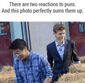 Dank, Memes, and Puns: There are two reactions to puns  And this photo perfectly sums them up Two reactions to puns by johnny123bravo MORE MEMES