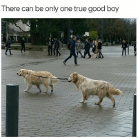 Memes, Scholar, and Only One: There can be only one true good boy Ancient scholars have proclaimed it is so. (@memes)