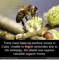 islanders: There have been no beehive losses in  Ti  the embargo, the island now exports  valuable organic honey.  weird-facts.org  @factsweird