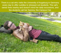 Memes, 🤖, and Sammy: There is a cat who visits the University of Augsburg in Germany  every day to offer cuddles to stressed out students. The cat's  owner lives nearby and doesn't mind her daily excursions, and  the students call her Sammy, the Campus Cat. Omg.😍😍
