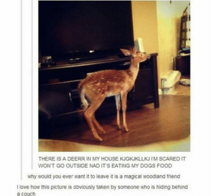 Strong survival instincts: THERE IS A DEERR IN MY HOUSE KJGKJKLLKJ I'M SCARED IT  WON'T GO OUTSIDE NAD IT'S EATING MY DOGS FOOD  why would you ever want it to leave it is a magical woodland friend  I love how this picture is obviously taken by someone who is hiding behind  a couch Strong survival instincts